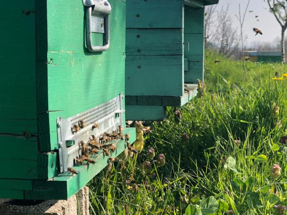 Êtres à poils - Émission de field recording rural et urbain sur les animaux