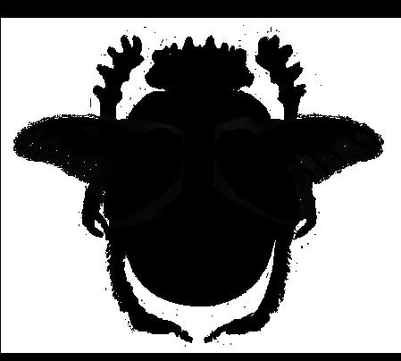 Le scarabée, symbole de Radio Nunc